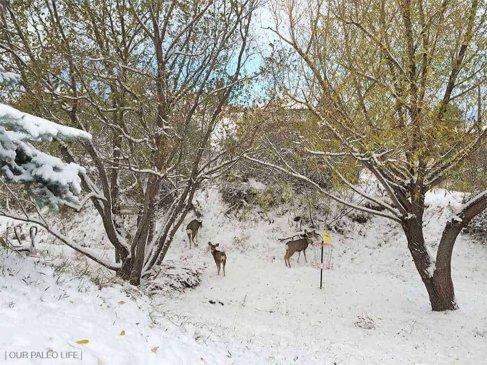 First Snow in the Foothills of Colorado