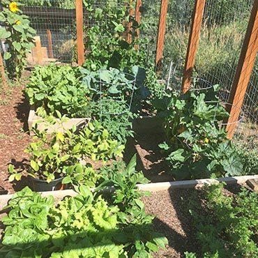 Colorado Garden Growth