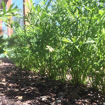 Gardening in Colorado