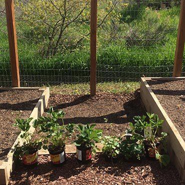Pre Grown Plant Makes Things Easy
