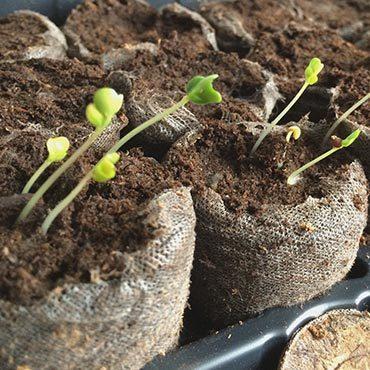 Preparing Plants for Colorado Garden