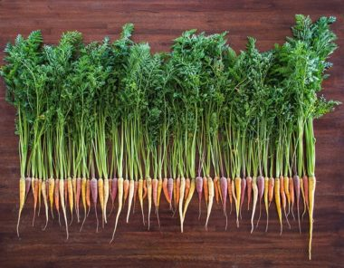 Rainbow Blend Carrots in our High-Altitude Colorado Garden