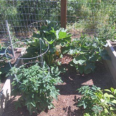 Tomatos and Zucchini