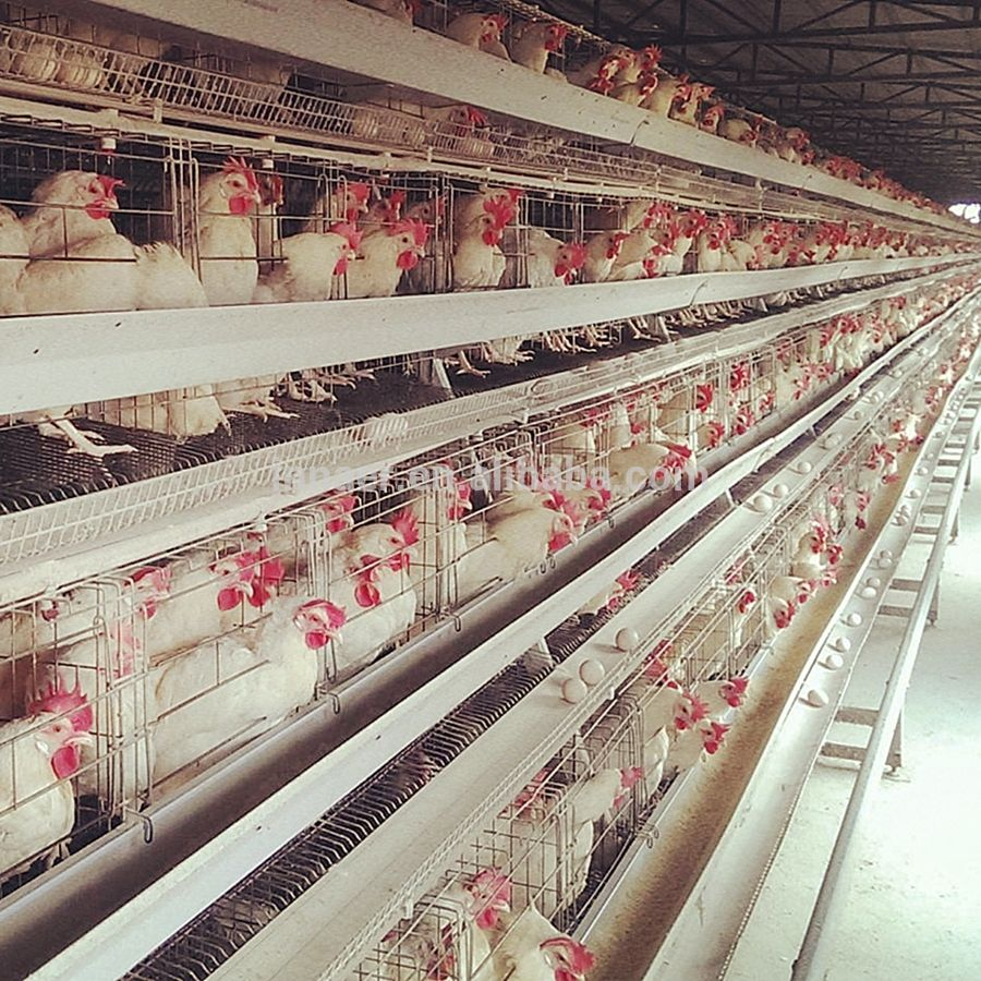 Factory Chicken Farm