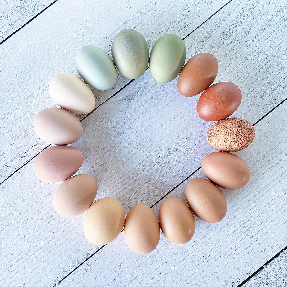 Pretty Egg Colors from Buckhorn Cliffs